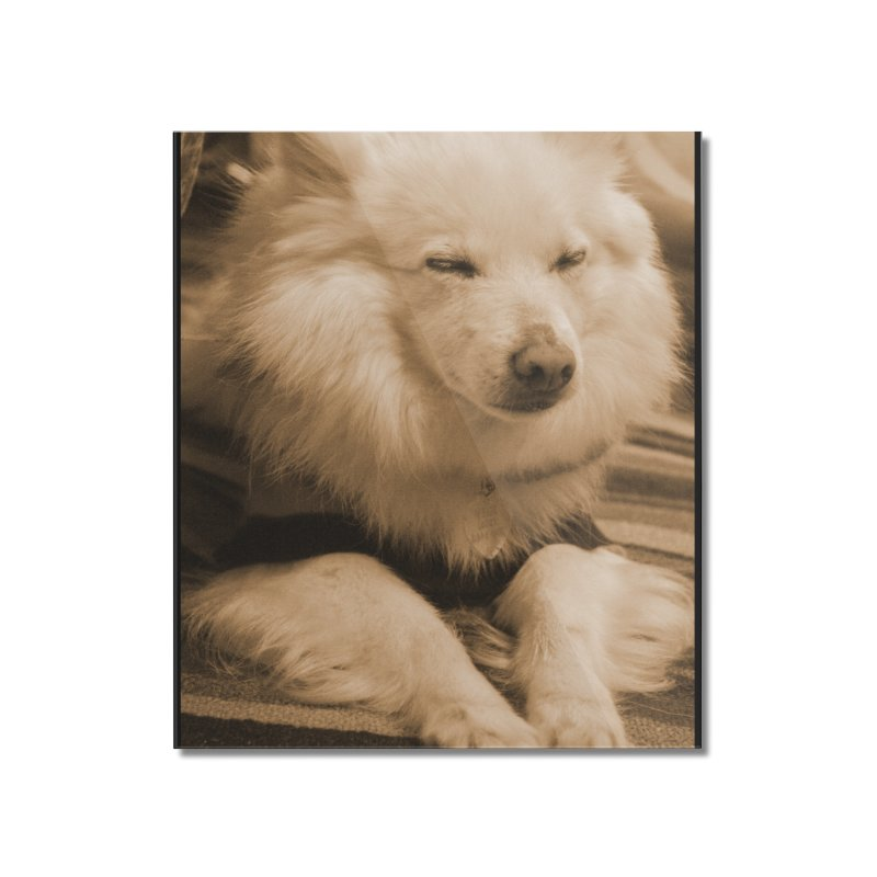Joey Asleep Sepia Tone Home Mounted Acrylic Print by Joey The Magical Dog
