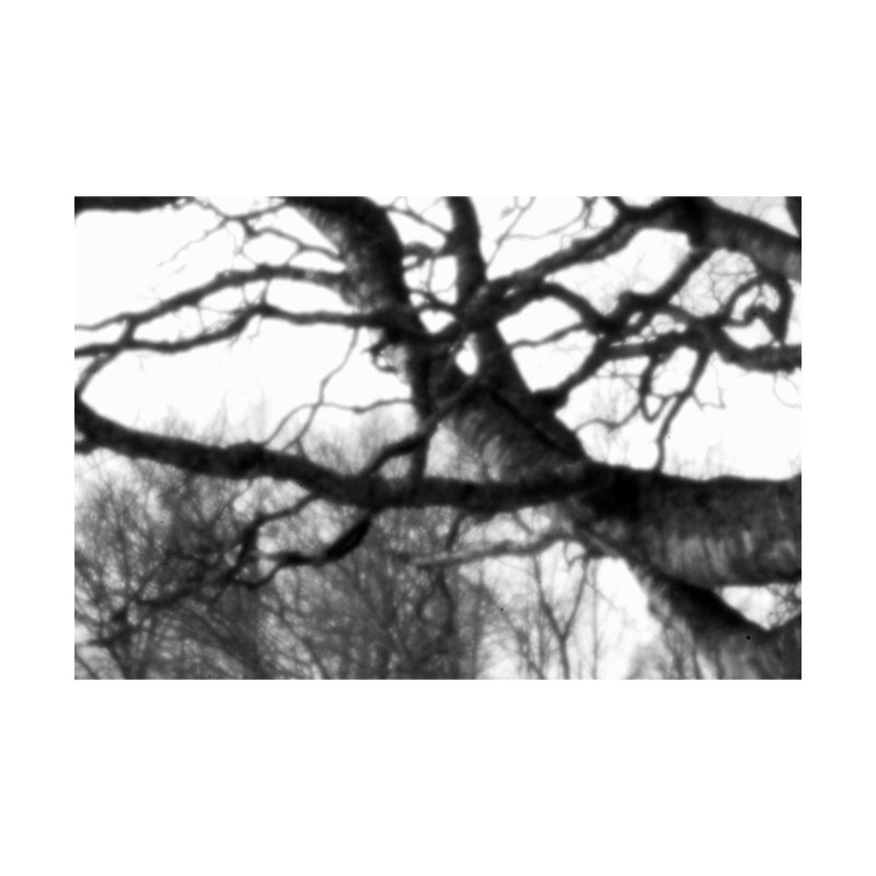 Old Birch Tree - pinhole photograph Accessories Magnet by Art by Maija R