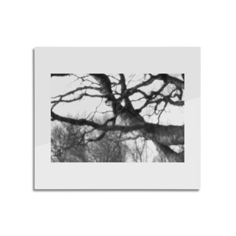 Old Birch Tree - pinhole photograph Home decor Mounted Acrylic Print by Art by Maija R