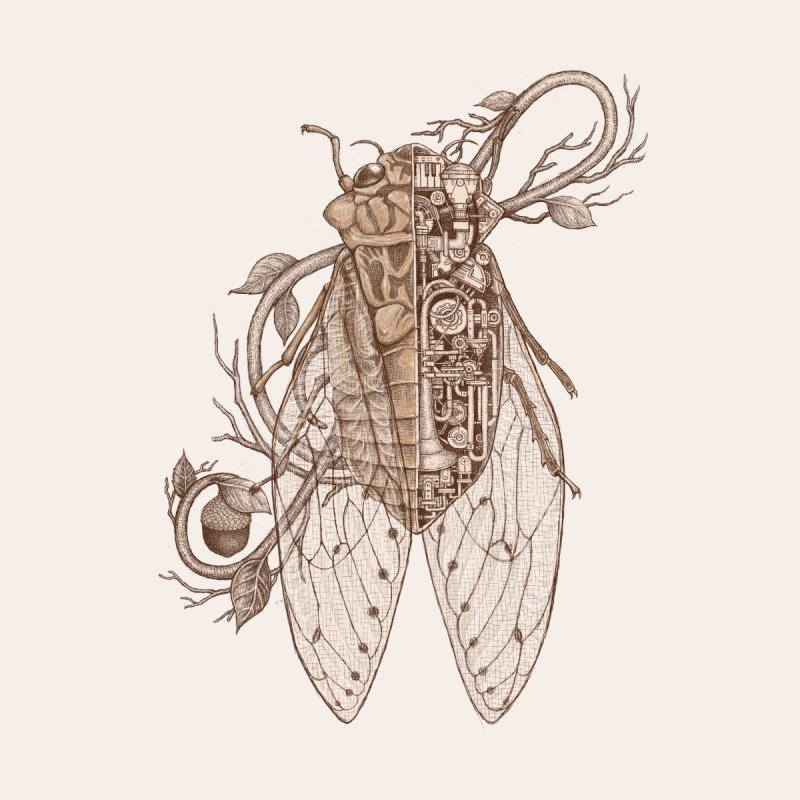 anatomy of cicada None  by makapa's Artist Shop