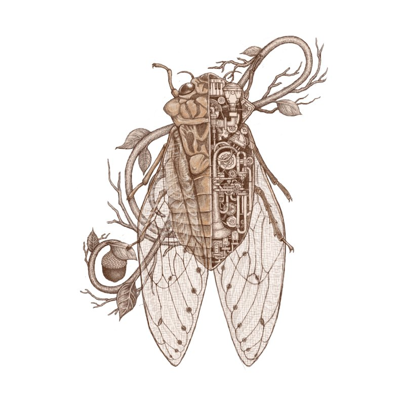 Anatomy of cicada by makapa's Artist Shop