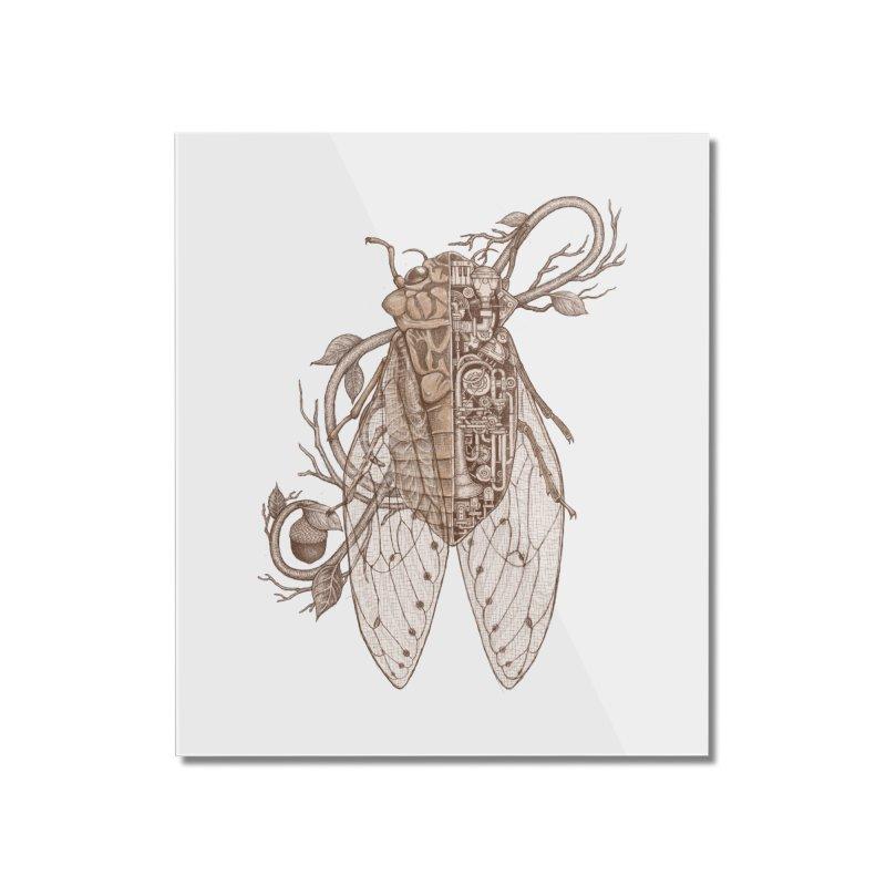 Anatomy of cicada Home Mounted Acrylic Print by makapa's Artist Shop