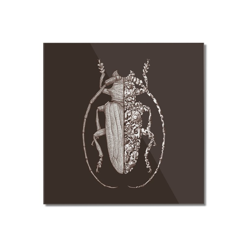 Sternotomis sci-fly Home Mounted Acrylic Print by makapa's Artist Shop