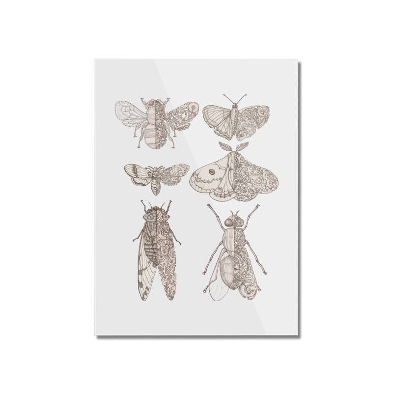 sci-fly collection Home Mounted Acrylic Print by makapa's Artist Shop
