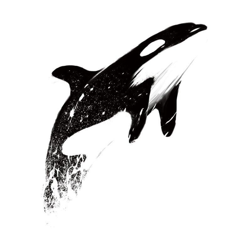 orcas can fly by martinskowsky