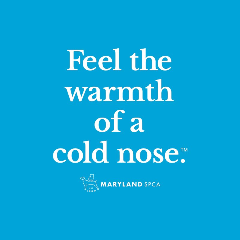 Feel the Warmth of a Cold Nose Accessories Magnet by Maryland SPCA's Artist Shop