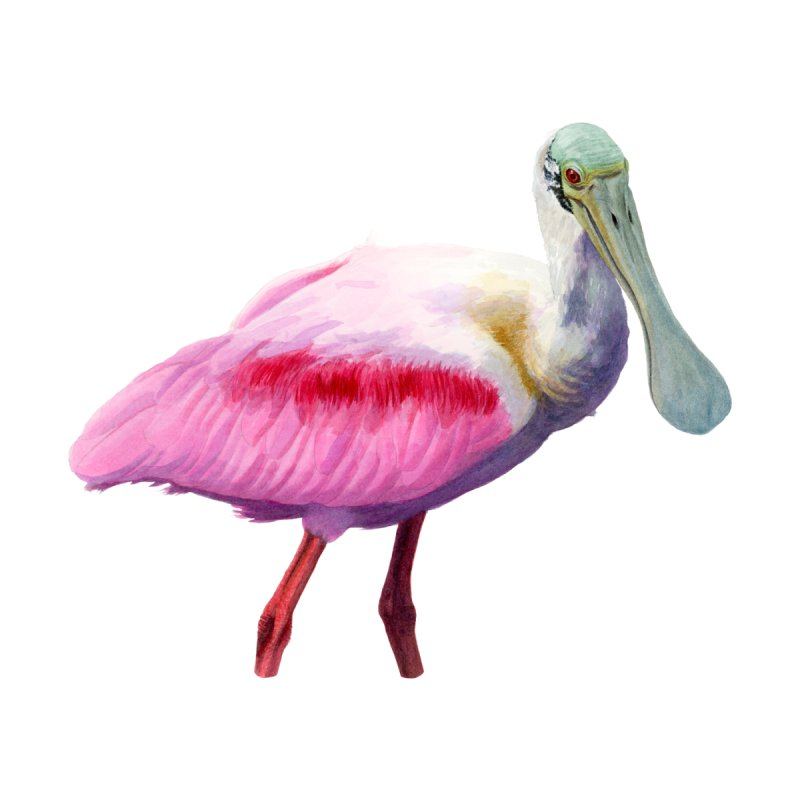 Roseate Spoonbill Adult Men's T-Shirt by May Jernigan's Artist Shop