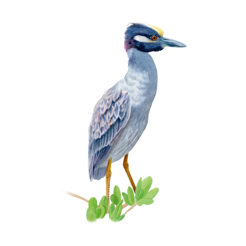 Yellow Crowned Night Heron by May Jernigan's Artist Shop