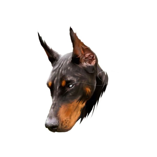 Design for DOBERMAN