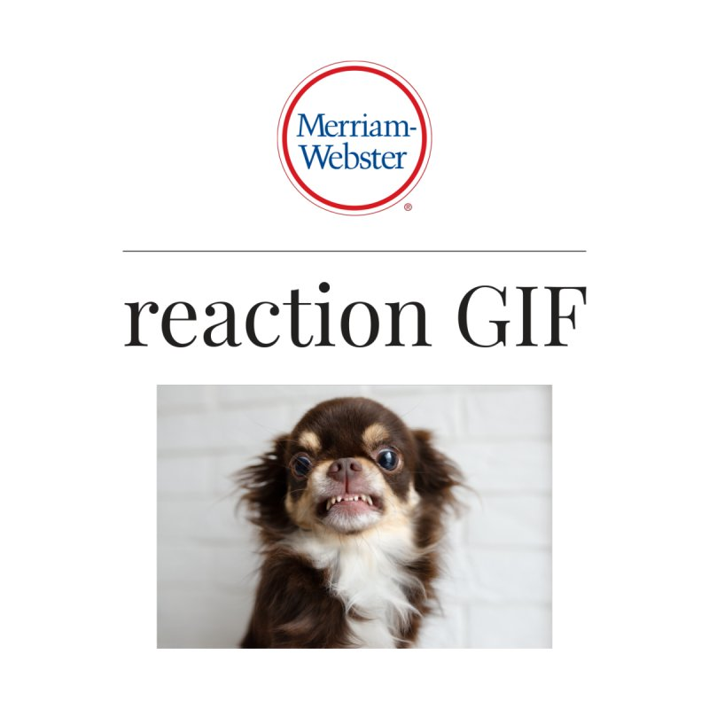Reaction GIF Women's Tank by Merriam-Webster Dictionary