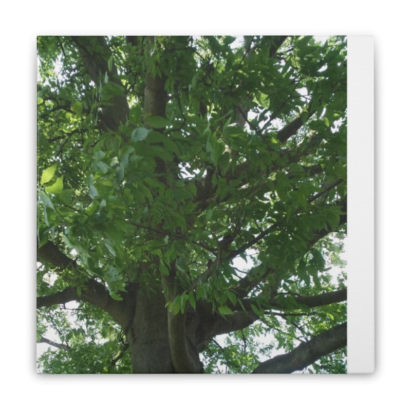 Tree Top Home Stretched Canvas by Mind-art Passion