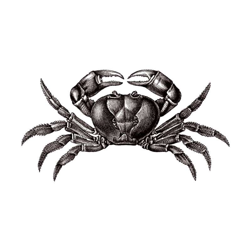 Crabby by Mitchell Black's Artist Shop