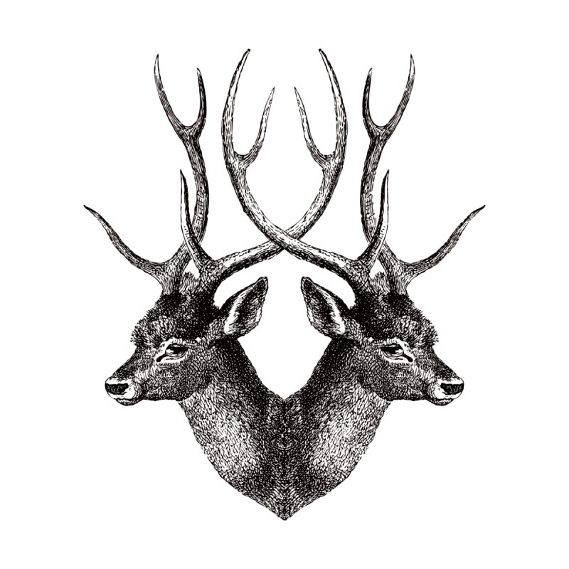 Stag by Mitchell Black's Artist Shop