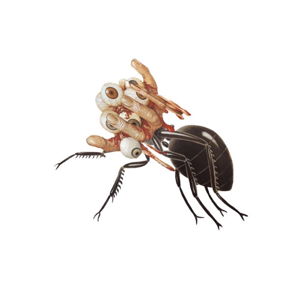 image for Mutant Ant
