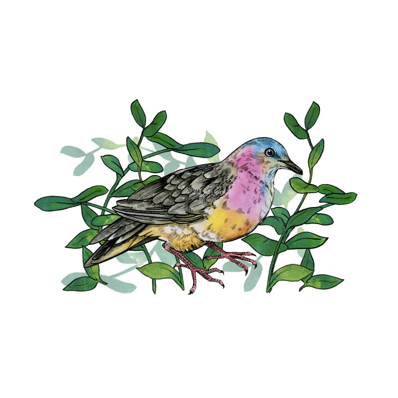 Tolima Dove by mwashburnart's Artist Shop