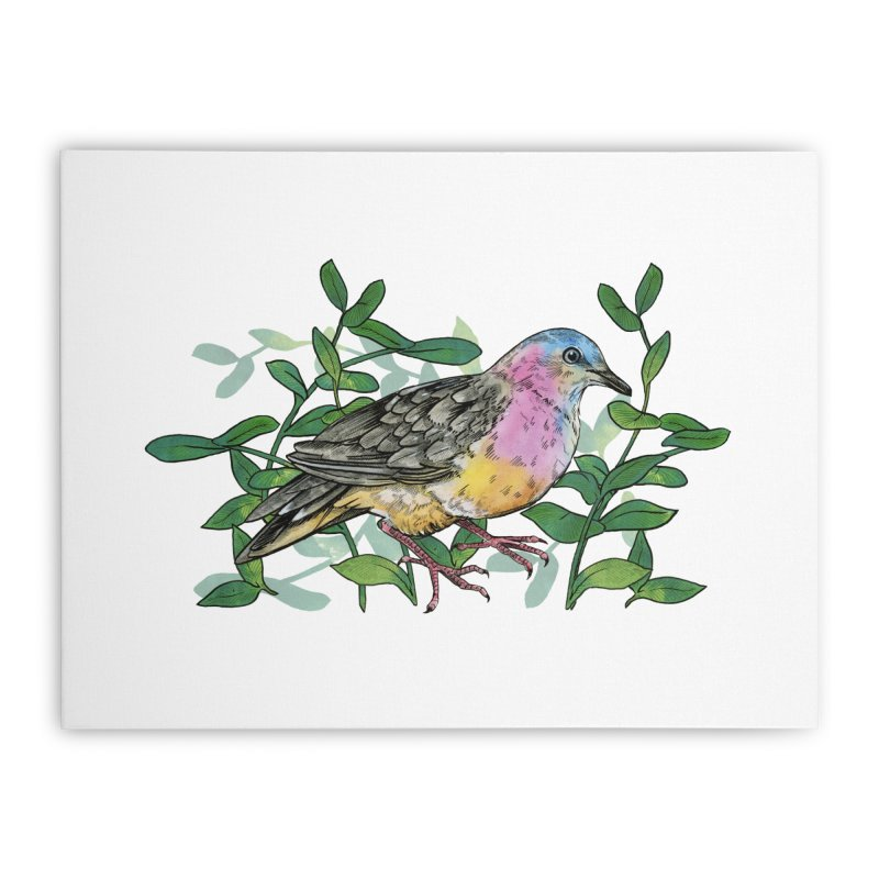 Tolima Dove Home Stretched Canvas by mwashburnart's Artist Shop