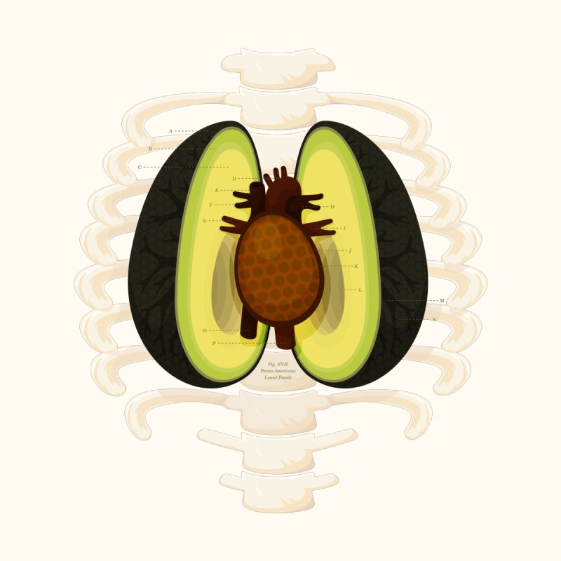 Avocado Anatomy by MykoWu's Artist Shop