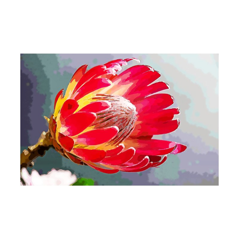 Protea Bloom by Nate Hart Studios Artist Shop