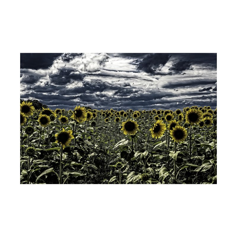 Dark Sunflower Field by Nate Hart Studios Artist Shop