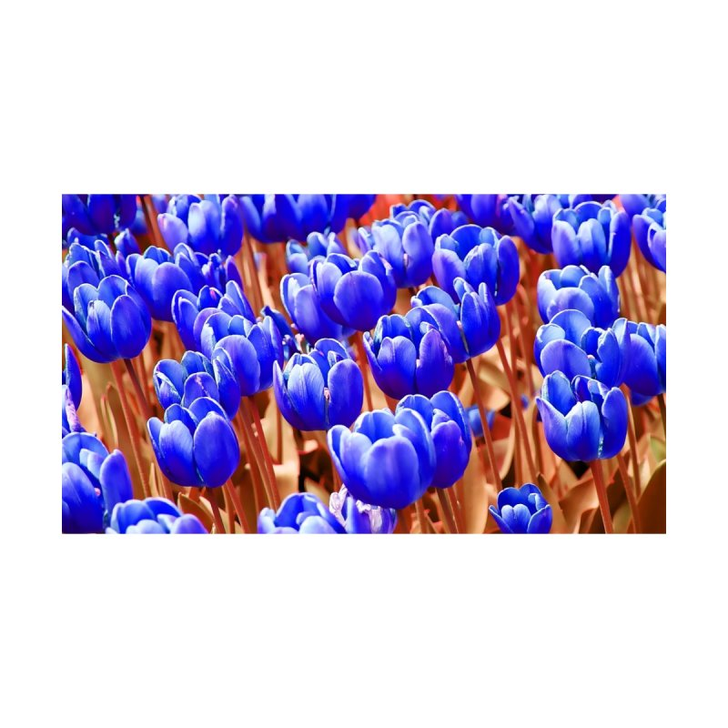 Blue Tulips by Nate Hart Studios Artist Shop