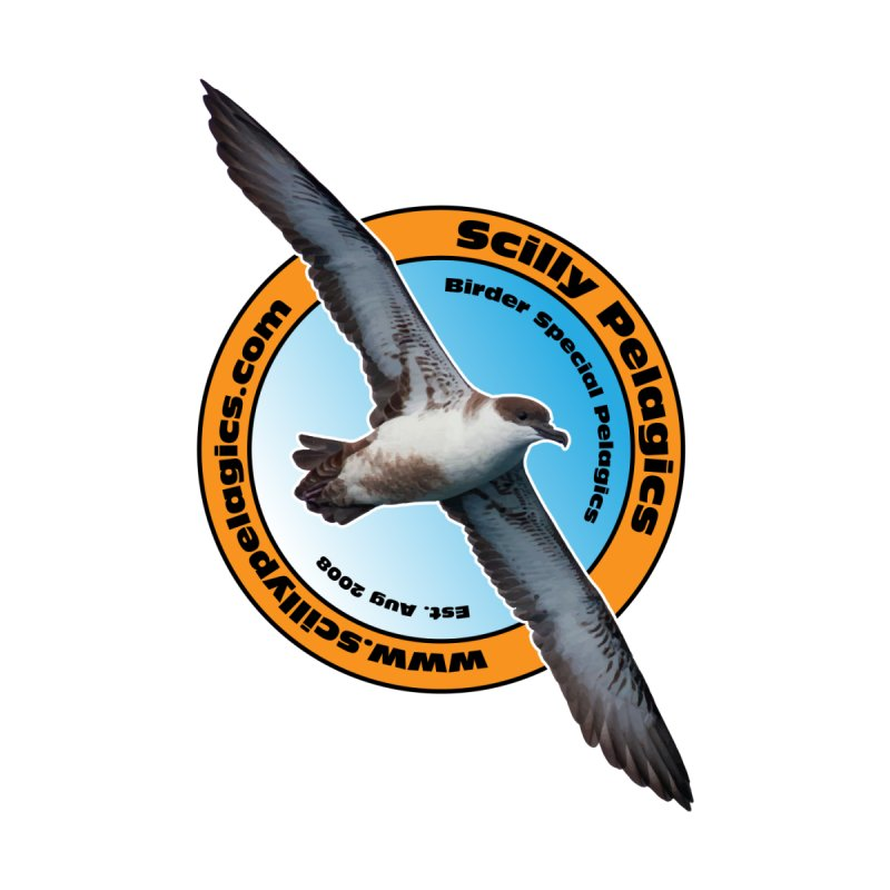 Scilly Pelagics - Great Shearwater by Oceanrunner's Artist Shop