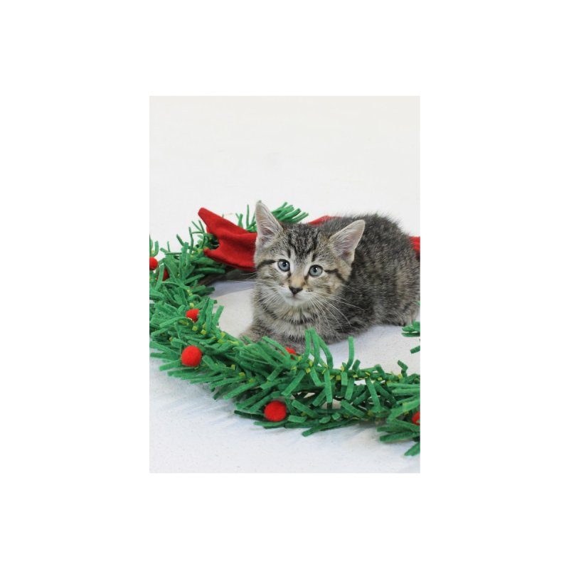 Holiday Greeting Card - Kitten Accessories Greeting Card by operationkindness's shop
