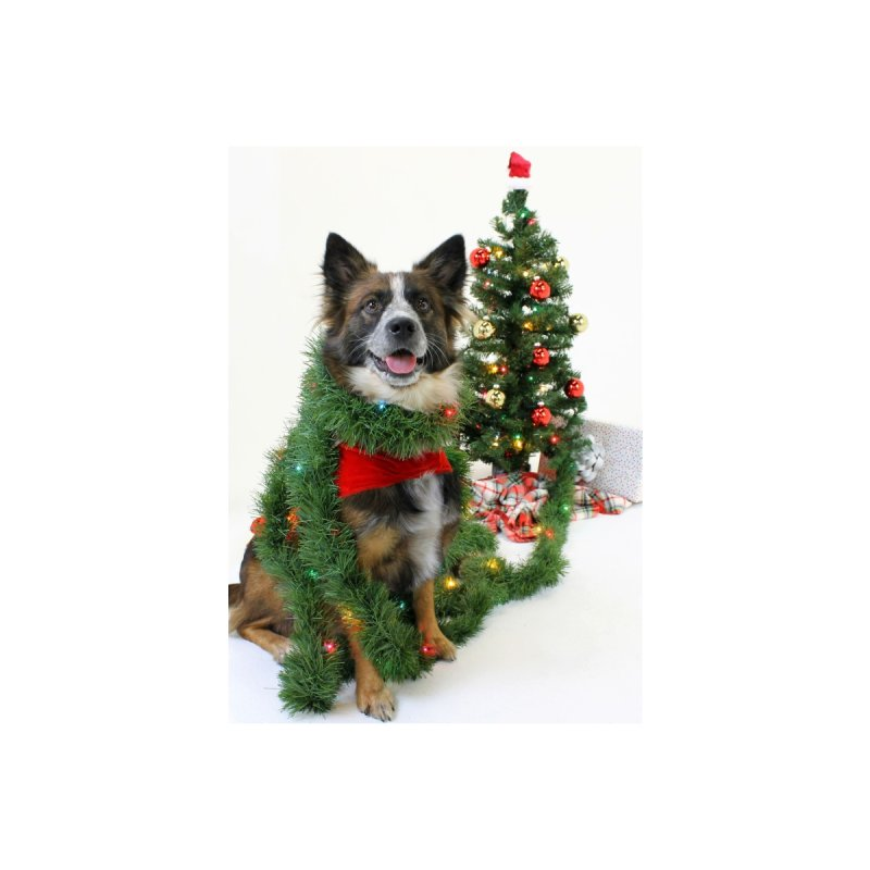 Holiday Greeting Card - Dog Accessories Greeting Card by operationkindness's shop