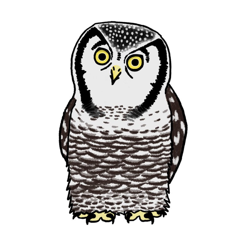 Hawk Owl by Owl Basket