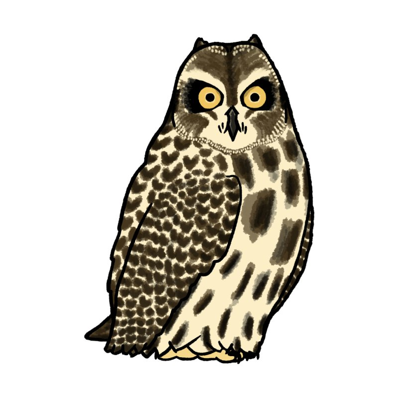 Short-eared Owl Accessories Sticker by Owl Basket