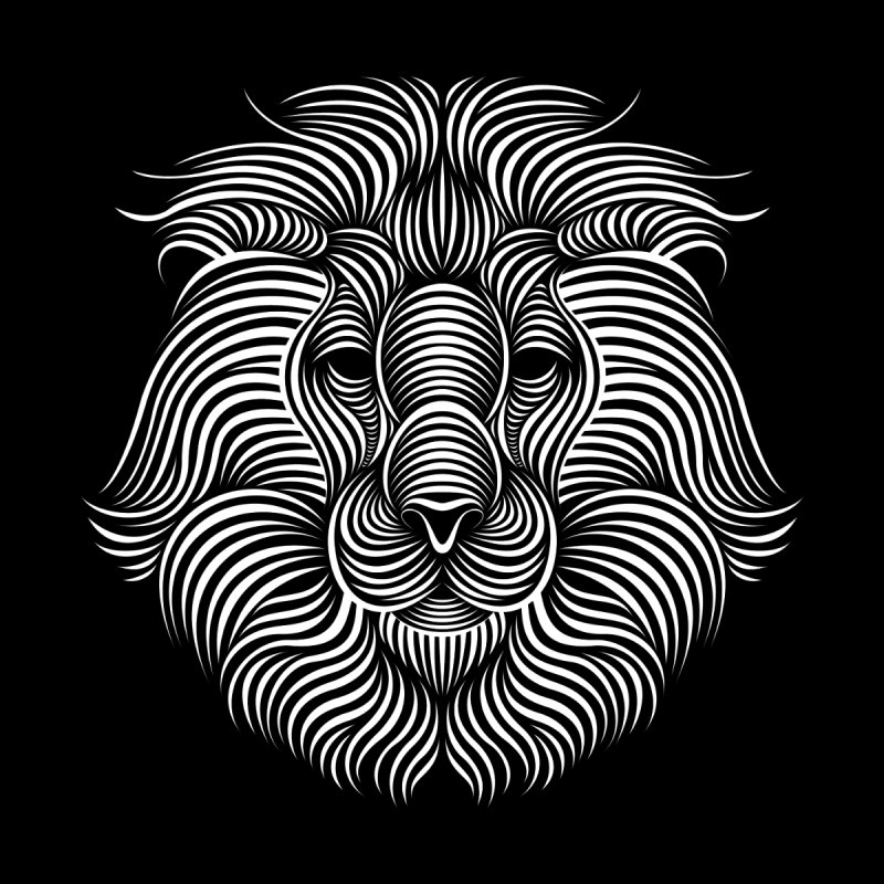 Lion by Patrick seymour