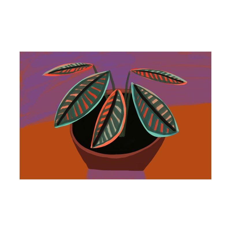 Croton Plant   by Michael Pfleghaar Design