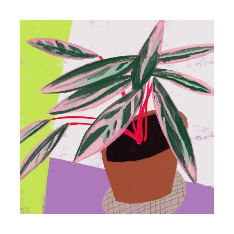 Stromanthe Plant   by Michael Pfleghaar Design