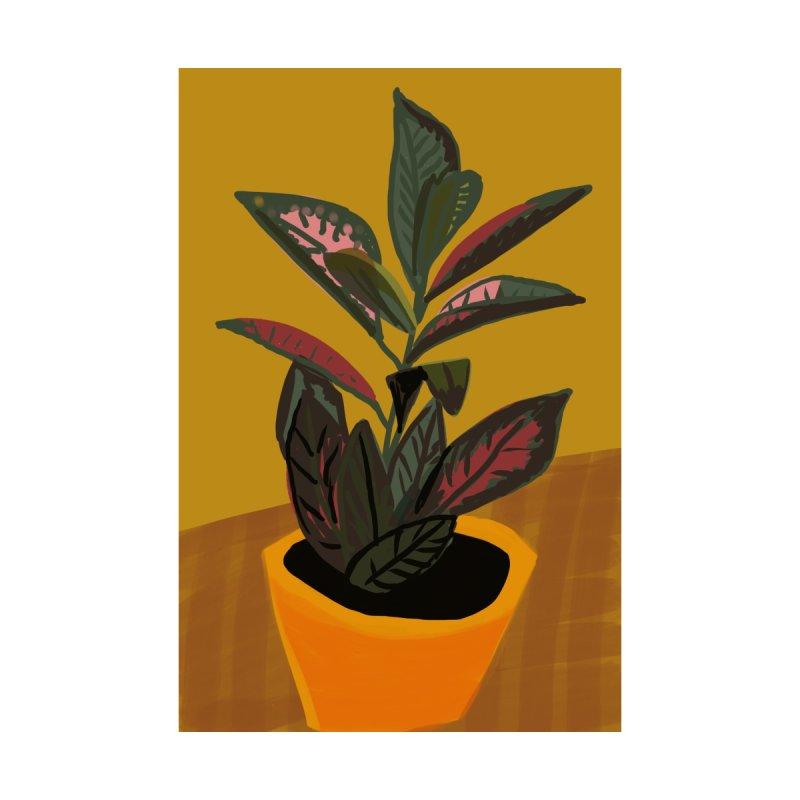 Croton Plant 1   by Michael Pfleghaar Design