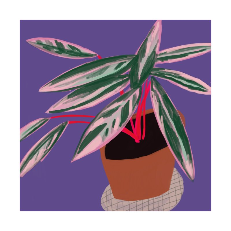 Ultra Violet Stromanthe Plant by Michael Pfleghaar