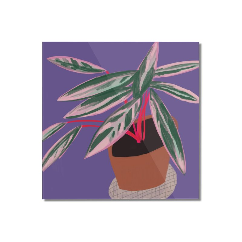 Ultra Violet Stromanthe Plant Home Mounted Acrylic Print by Michael Pfleghaar