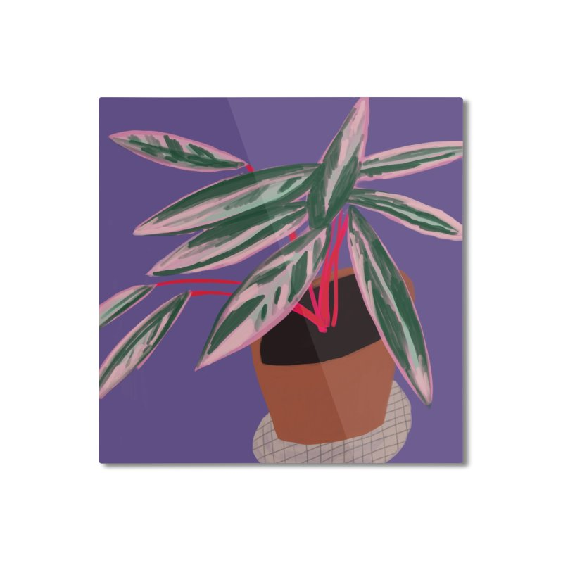 Ultra Violet Stromanthe Plant Home Mounted Aluminum Print by Michael Pfleghaar