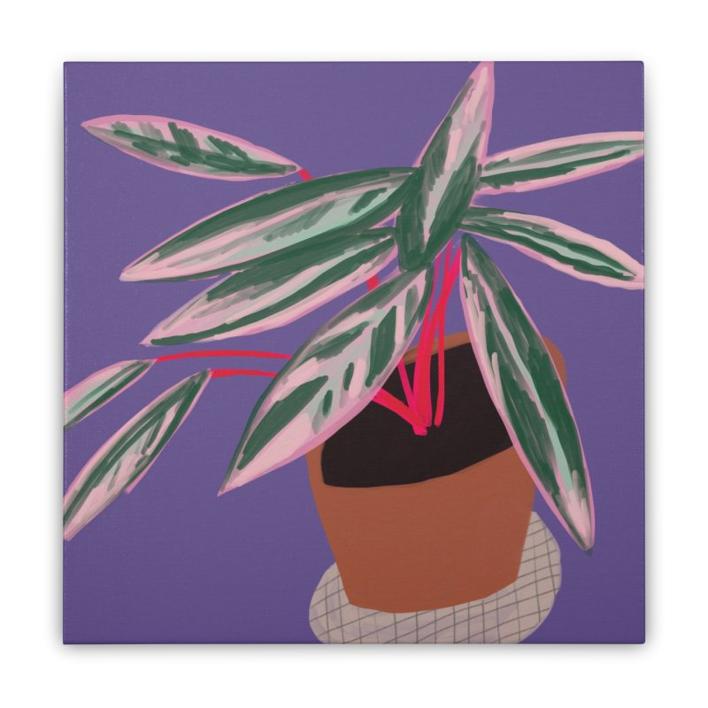 Ultra Violet Stromanthe Plant Home Stretched Canvas by Michael Pfleghaar