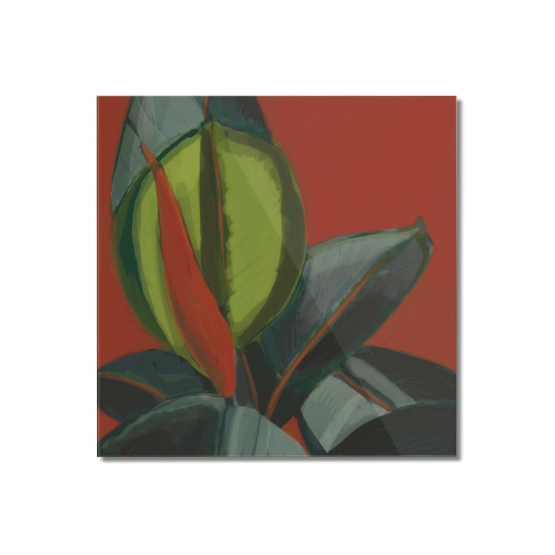 Rubber Plant on Red Home Mounted Acrylic Print by Michael Pfleghaar