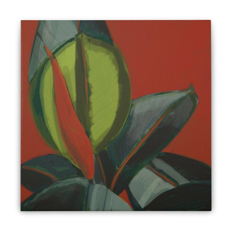 Rubber Plant on Red Home Stretched Canvas by Michael Pfleghaar