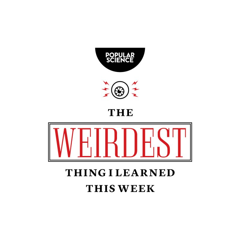 """The Weirdest Thing I Learned This Week"" Logo Tote Accessories Bag by Popular Science Shop"