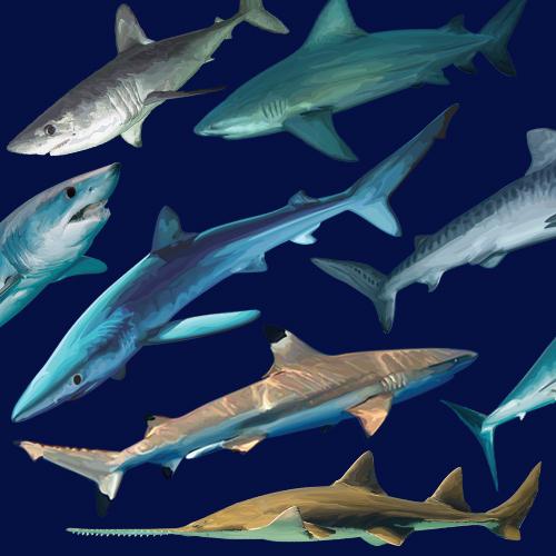 Shark-Week-All-Year-Long