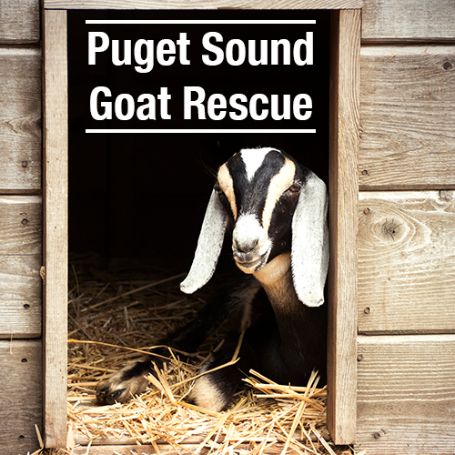 Puget Sound Goat Rescue's Artist Shop Logo