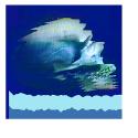 robsheridan Logo