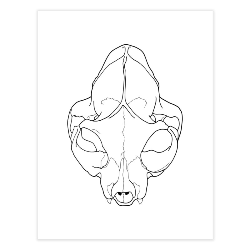 House Cat Skull, Top View Home Fine Art Print by rootinspirations's Artist Shop