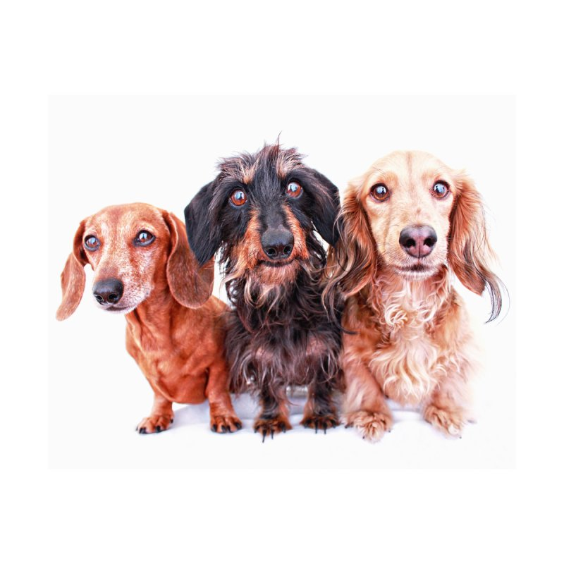 Dachshund Trio by rufusontheweb's Artist Shop