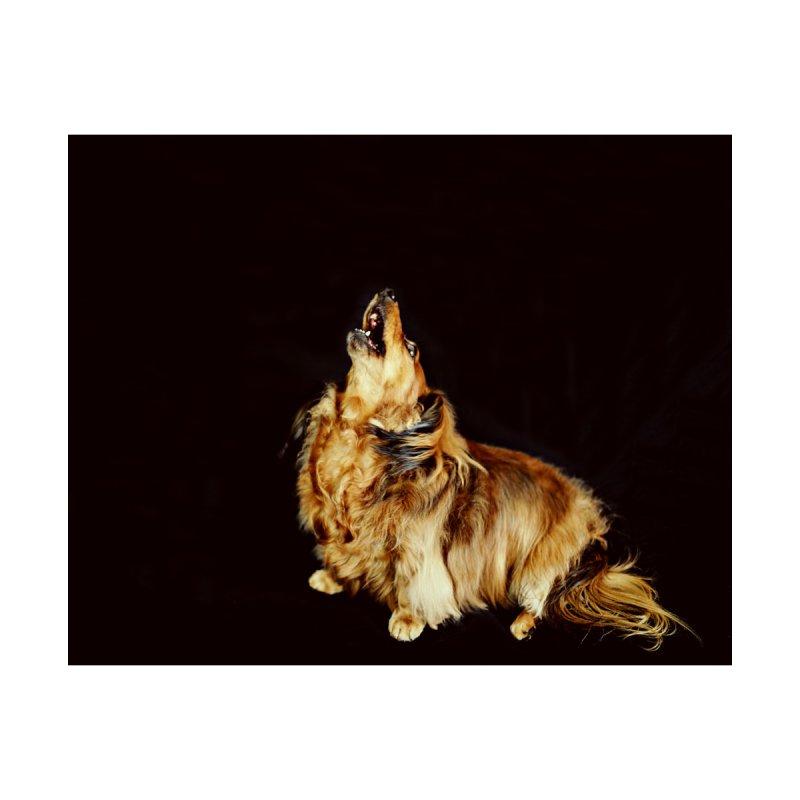 Howling longhair   by rufusontheweb's Artist Shop