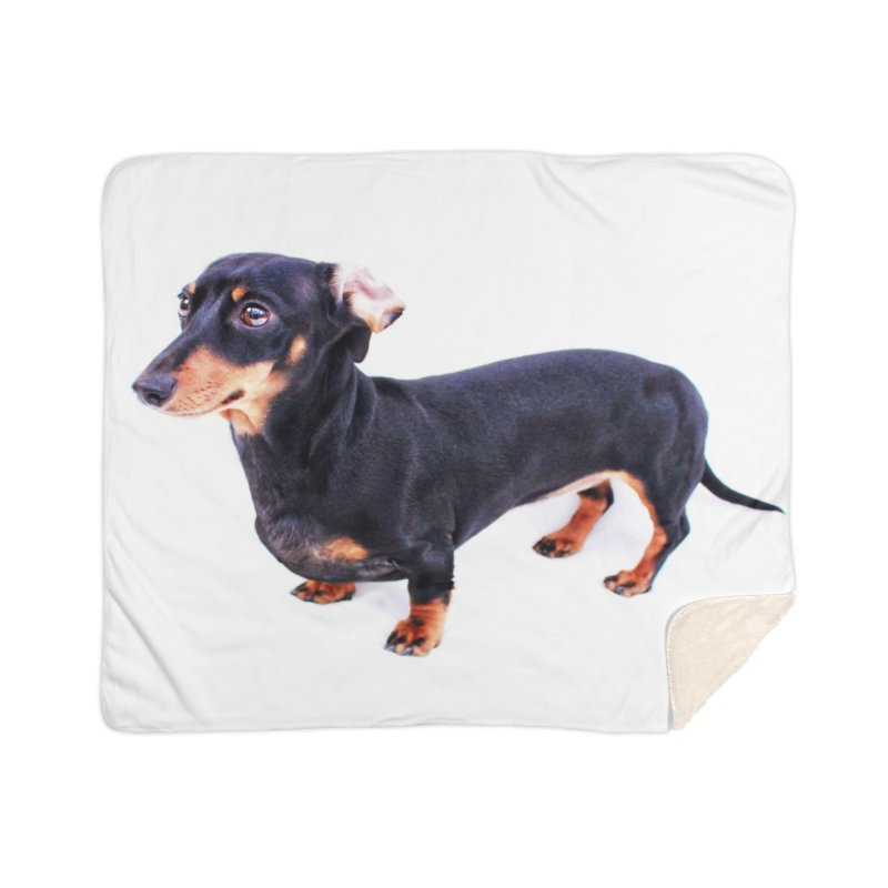 Black and Tan Ear Flip Home Sherpa Blanket Blanket by rufusontheweb's Artist Shop