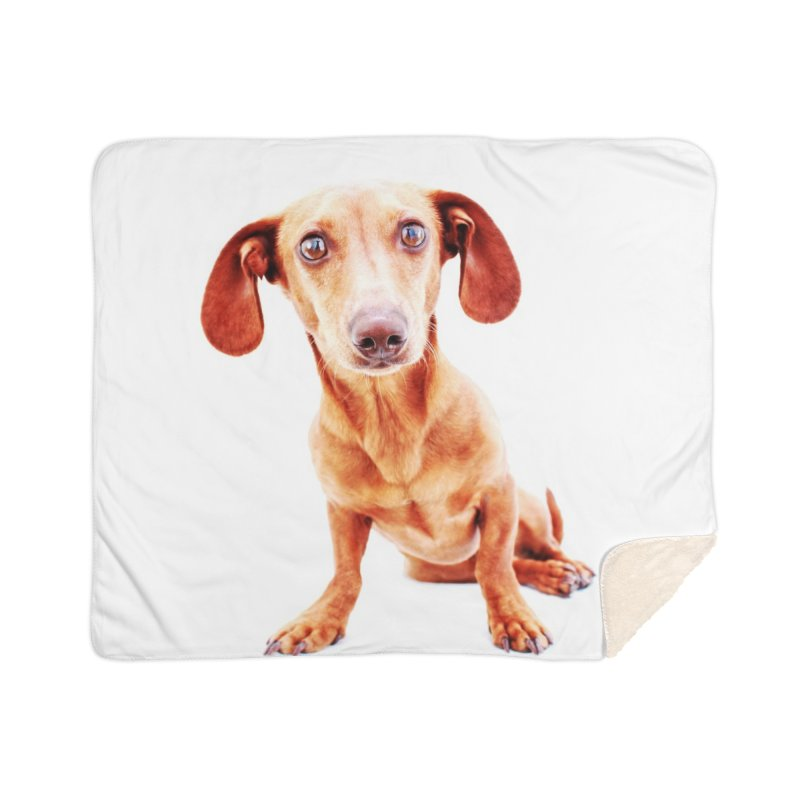 Smooth dachshund Home Sherpa Blanket Blanket by rufusontheweb's Artist Shop