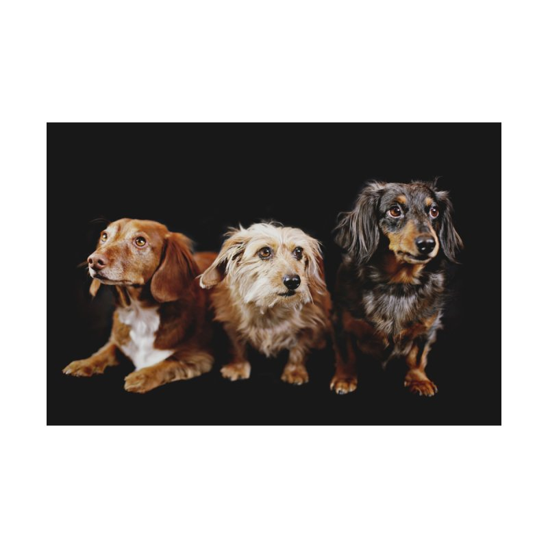 Longhair dachshunds   by rufusontheweb's Artist Shop