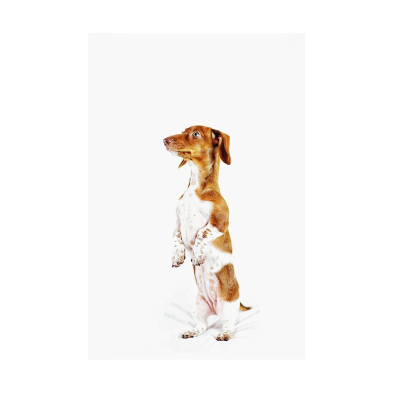Piebald Dachshund Men's T-Shirt by rufusontheweb's Artist Shop